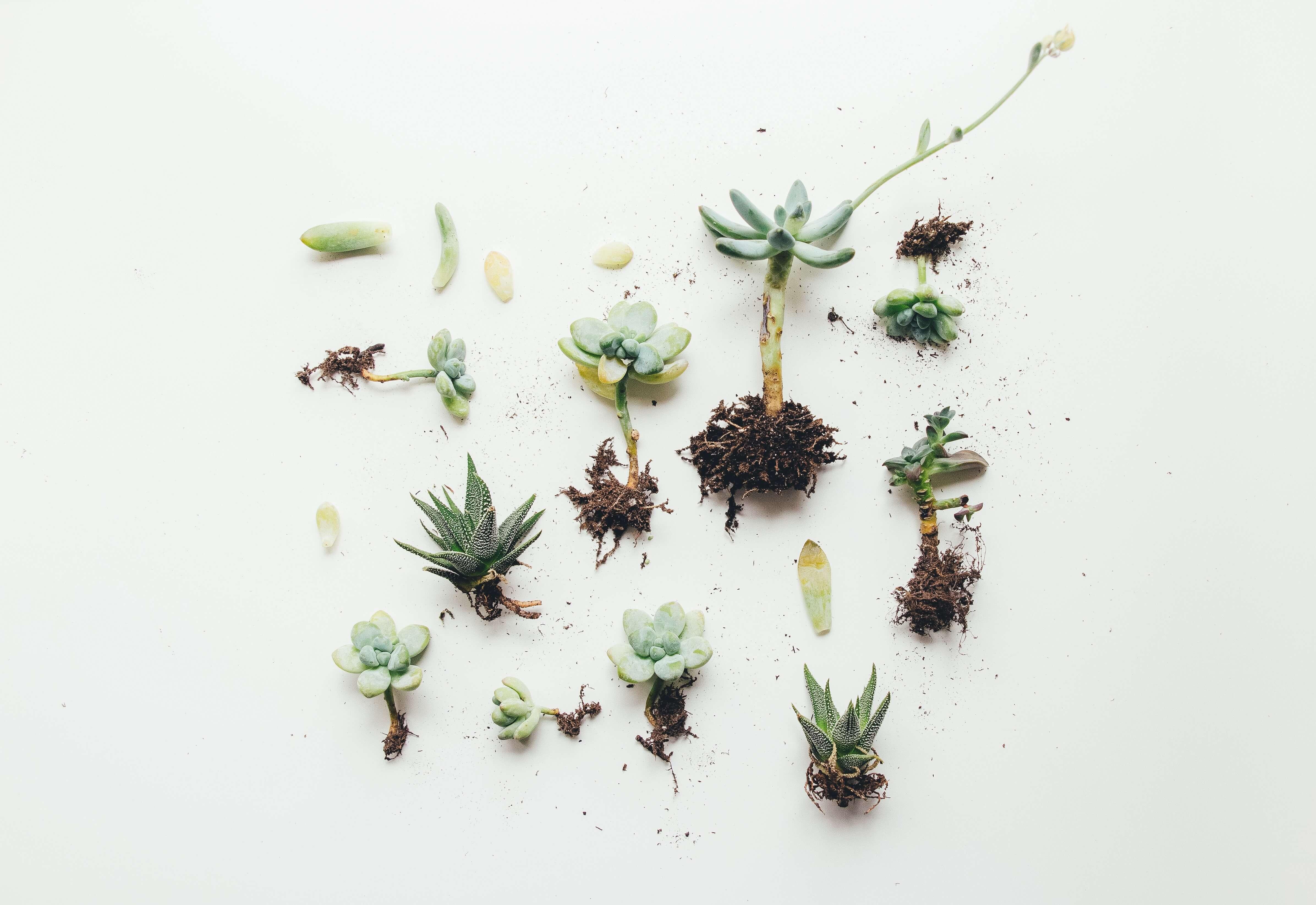 eco organica